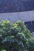 晩春の降雨