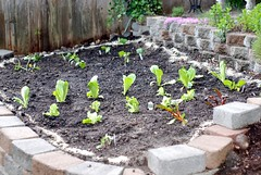 Planted Vegetable Garden