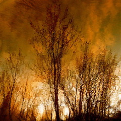 My wild river change me! (Denis Collette...!!!) Tags: trees sunset reflection art bravo quality rivire reflet arbres change coucherdesoleil wildriver magicdonkey changement fivestarsgallery world100f obramaestra