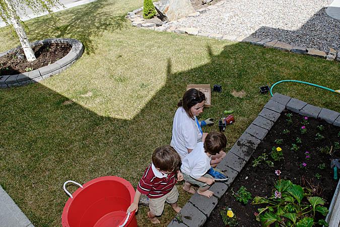 Planting flowers3465