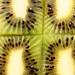 kiwi.quad