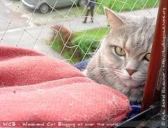 Weekend Cat Blogging #102