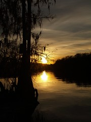 River Sunset (blondecavefish) Tags: trees sunset sun reflection river florida cyprus tropical tropicalsunset manateesprings anawesomeshot manateestatepark