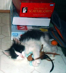 Playtime! (i_luv_deftones) Tags: playing cute cat fun toy toys kitten play fuzzy feather kitty fluffy kittens playtime cattoy