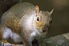 Who? Me? (BarneyF) Tags: park nature liverpool squirrel wildlife merseyside sefton
