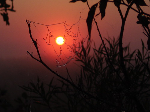 September Morn Cobwebs (5)