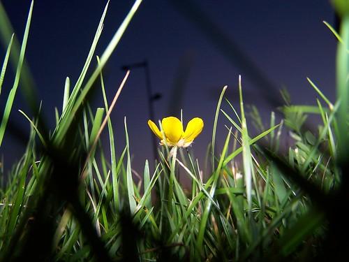 gras bloem flits