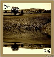 Yin & Yang (Kinryuu_JFJ) Tags: sky tree monochrome field collage sepia vintage landscape design blurry corn scenery special yang yin effect treatment impressedbeauty