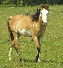 steed (slider5) Tags: horse galope