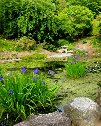 Berkeley Botanical Garden Pond F1280 by CoastRanger