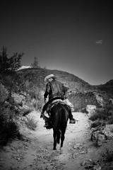ridinG awaY (Luis Montemayor) Tags: horse mexico caballo cowboy desert oldman desierto anciano myfavs realdecatorce vaquero sanluispotosi dflickr dflickr180307