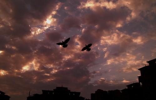 Birds Over the sky