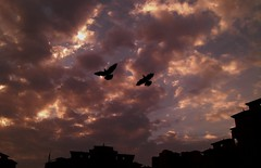 Birds Over the sky (Swami Stream) Tags: morning sky india birds clouds pigeons bombay favourite coolest silhoutte urbanbirds swami doves swaminathan blueribbonwinner supershot dosti wadala anawesomeshot impressedbeauty amazingshots flickrdiamond swamistream dostiourbuildingmumbai swamistreamcom