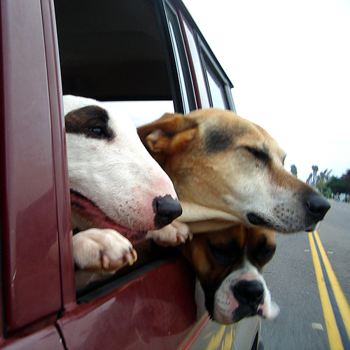 Three Dog Road Trip