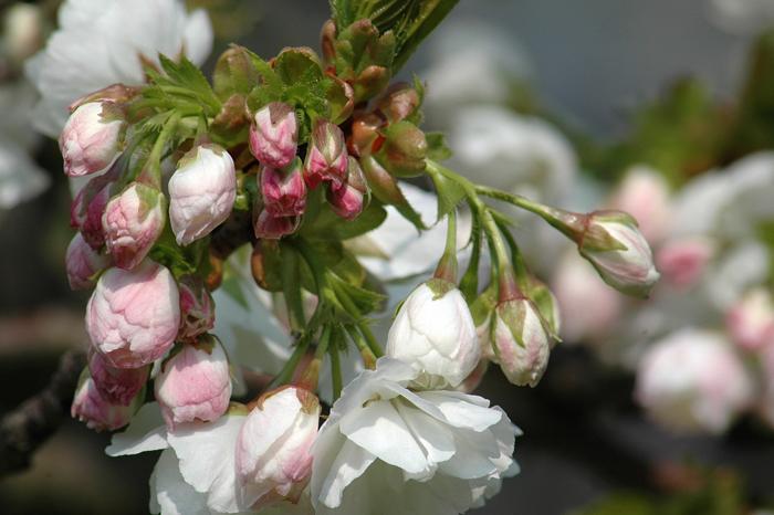 Spring :: Click for previous photo