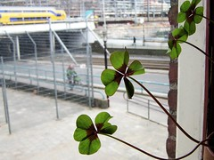 naar buiten kijken (wester) Tags: street 15fav plants window bike train out utrecht bokeh trainstation centraalstation lookingout top20bokeh
