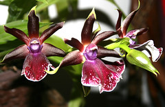 The Orchid (Anton - arss5000) Tags: orchid flower colorful paradisiacal
