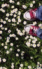 A Flickr Classic; or: Lack of Inspiration (*maya*) Tags: flowers inspiration classic primavera spring shoes flickr lawn converse daisy fiori prato allstar scarpe margherite classico lackofinspiration abigfave