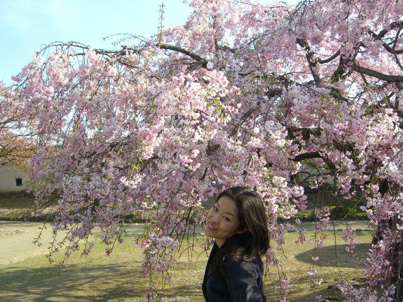 Misaki sotto un ciliegio