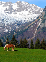 (N. Mexico) Tags: horse snow mountains green beautiful field bavaria austria europe farm free bauernhof annaberg halflinger blueribbonwinner inspiredbylove holidayvacanzeurlaub absolutelystunningscapes