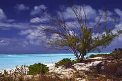 A Tree with an Ocean View (WisDoc) Tags: ocean tree beach canon bravo caribbean turks caicos turksandcaicos providenciales wisdoc gracebaybeach