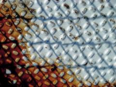Untitled (moonbird) Tags: rust firetower wnc sonydsch5