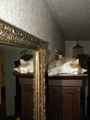 lofty goals (azmarine) Tags: animals ginger 2006 kitties