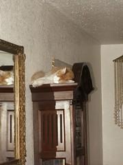 Ginger (azmarine) Tags: animals ginger 2006 kitties