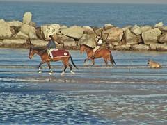01.01.02 (maurizzz) Tags: horses dog beach cane rocks ride tide low rimini lowtide cavalli spiaggia lupo adriatico secca myfirstphotoonflickr lamiaprimafotosuflickr