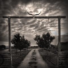 Welcome to Texas (Tex Flix) Tags: skull bravo gate texas entrance longhorn ennis artlibre