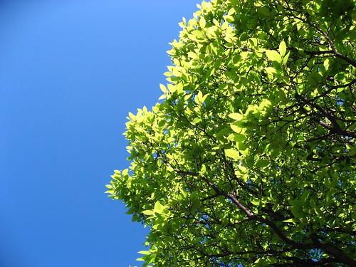 爆炸藍天綠葉
