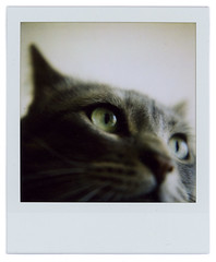 Cat closeup (Cℓea tecℓea) Tags: eye closeup cat polaroid sx70 sveva vevi closeuplens sx70blend