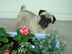 norman_flower_box_5_2007_a