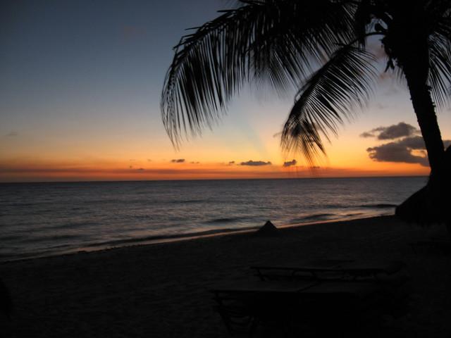 Aruba Palms
