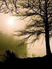 Sunrise and Fog Wheeler Wildlife Refuge - by lee.mccain.photorama