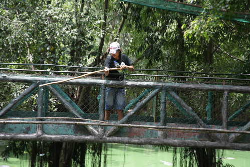 Peanut fishing for alligators