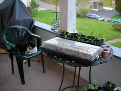 seedlings (Beth Lemon) Tags: garden gardening etsy compost seedlings blackraspberries