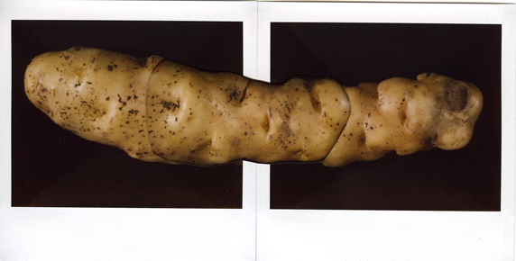 01 (local organic potato).jpg