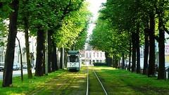 Greenness (Amaury Henderick) Tags: trees green bomen groen belgium belgique tracks belgi tram vert arbres rails avenue 169 ghent gent gand laan pcc sporen tram4 r40 begijnhoflaan