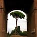 Rome - Palatine Hill Roman Arch framing Italian Stone Pine Tree