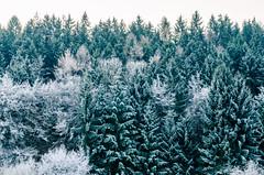 Winter (cb.photography) Tags: winter snow schnee icq eis tree trees baum bäume wood wald forest fir tanne tannen weihnachten lahndillkreis lahndill ldk dillenburg sunrise sonnenaufgang morgens morgen morning cold kalt nature natur wildlife