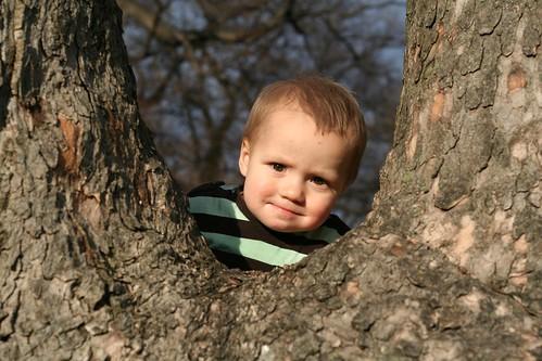 Tree Hugger 3