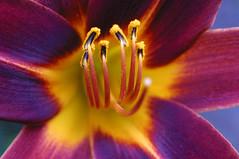Flower closeup (pedro vit) Tags: flower topf25 closeup topc100 blueribbonwinner flowerotica challengeyouwinner shieldofexcellence anawesomeshot colorphotoaward impressedbeauty ltytr2 ltytr1 ltytr3 diamondclassphotographer flickrdiamond ysplix photofaceoffwinner photofaceoffplatinum pfogold 100commentgroup