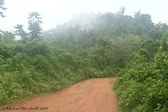Rio Silanche (Michael Woodruff) Tags: bird birds birding pvm lowlandforest nwecuador riosilanche lowerfoothills