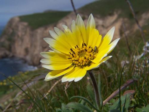 20070401 Wildflower