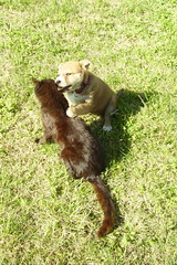 Honey and Blacky 041907 web