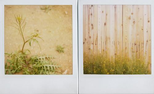jason's :: weeds