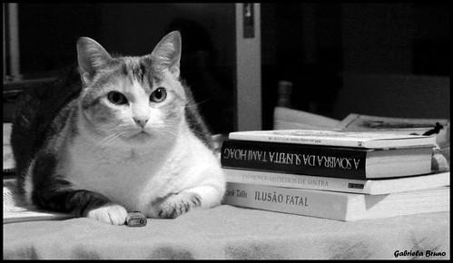 Gato e livros...