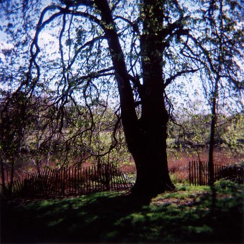 Holga Tree