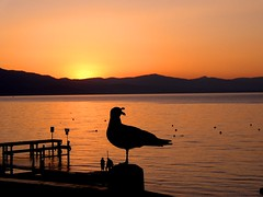 Tahoe Sunset (AnotherSaru - Limited mode) Tags: california ca sunset sea sky orange usa lake mountains nature water america us united nevada tahoe nv states gul seagul aplusphoto superhearts